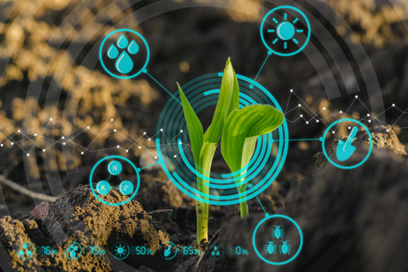 Growing young maize seedling in cultivated agricultural farm field with modern technology concepts Reklamní fotografie - 91833123