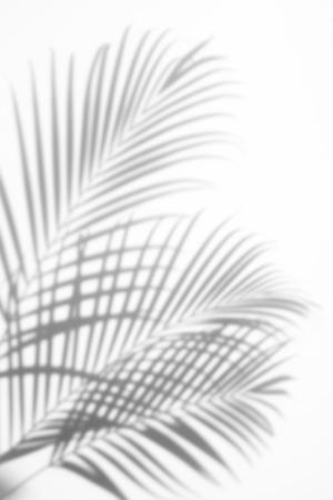 streszczenie tle liści palmowych cieni na białym tle. Biały i czarny Zdjęcie Seryjne