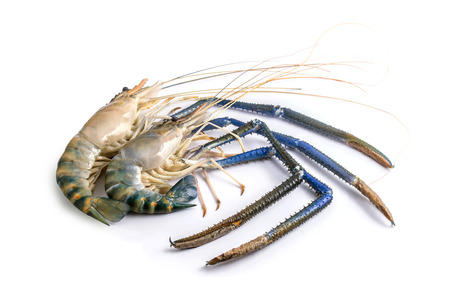 close up fresh two giant freshwater prawn isolate on white background