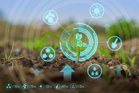 Groeiende jonge maïszaailing op gecultiveerd landbouwlandbouwbedrijfgebied met moderne technologieconcepten