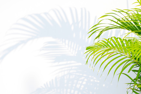 close up green palm leaves and shadows on a white wall Standard-Bild