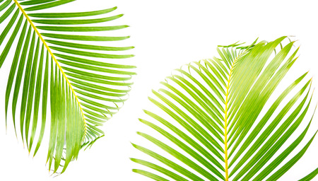 close up green palm leaves and shadows on a white wall Imagens