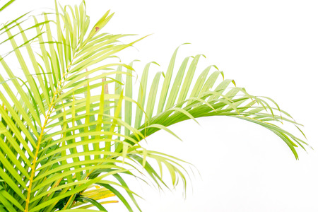 close up green palm leaves and shadows on a white wall Stock Photo