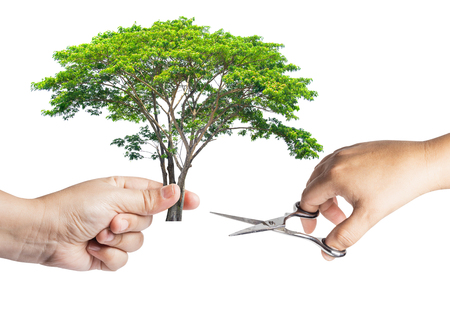 The hand is holding a tree cut with scissors with the other hand isolated on white background. Concept natural is easily destroyed because of man.