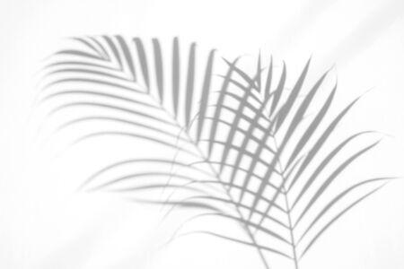 hojas de palmera de sombras sobre fondo de pared blanca. para el concepto de verano de diseño creativo Foto de archivo