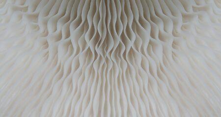 beautiful macro mushroom texture nature background. Using idea design pattern wallpaper concept nature work advertisement printing and website etc.