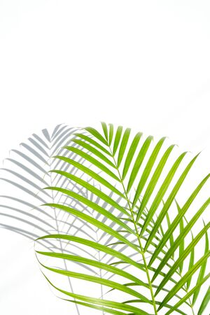 shadows palm leaf and green leaves on white wall background. for creative design summer concept Stock fotó