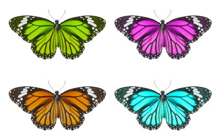 set colorful of butterfly isolated on white background, Danaus chrysippus, Yellow, pink, green, blue
