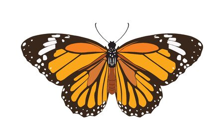 butterfly isolated on white background, insect vector illustration flat style Vetores