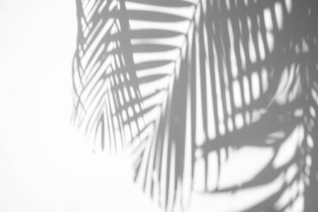 abstract background of shadows palm leaf on a white wall. Reklamní fotografie