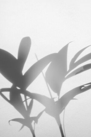 abstract background of shadows palm leaf on white concrete wall Reklamní fotografie