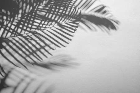 blur of shadows palm leaf on white wall background Reklamní fotografie