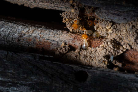 The small termite on the ground is searching for food in the cavity decaying timber
