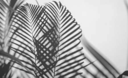 shadows palm leaf on white wall background 스톡 콘텐츠 - 151631907