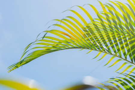 close up of green palm leaf background	on blue sky Reklamní fotografie