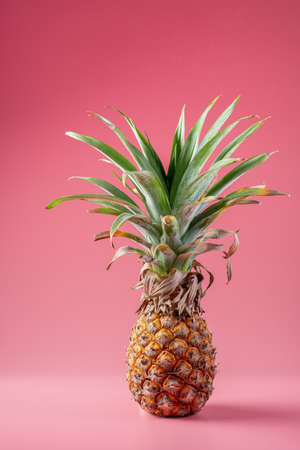 One dry pineapple fruit on the pink background Reklamní fotografie