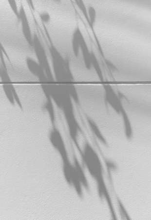 abstract of shadows leaf on white cement wall background 스톡 콘텐츠 - 154753635