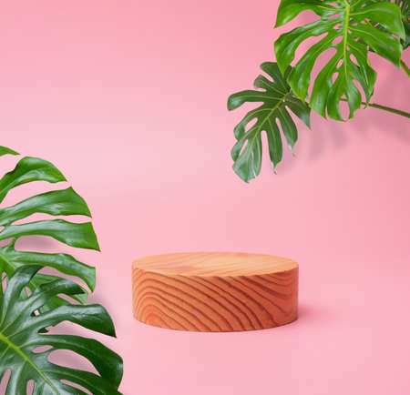 wooden podium stage cylinder for show product with green Monstera leaf on pink background with shadows