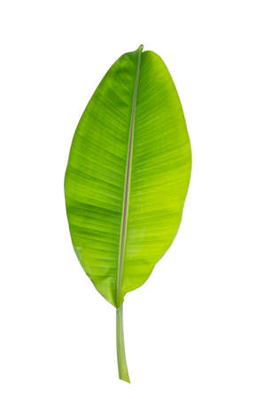 green banana leaf isolated on white background 写真素材