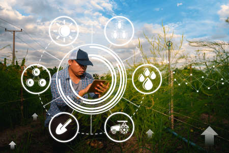 smart farmer using application by smartphone in asparagus field, concepts modern agricultural technology, digital farm, smart farming innovation