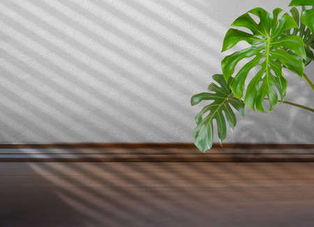 shadow batten of lath overlay on white concrete wall background with green Monstera leaf 写真素材