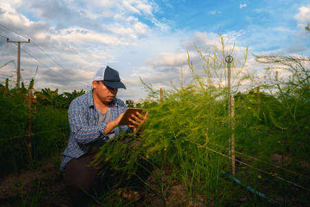 smart farmer concept using smartphone in asparagus field, modern technology application in agricultural growing activity Archivio Fotografico - 157008834