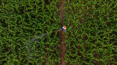 Aerial view above farmers spraying pesticides plants in corn field using an automatic machine 스톡 콘텐츠