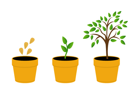 Phases plant growth. vector illustration tree with yellow leaves in the pot. Sprout in the ground. Flat style. Illustration