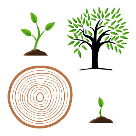 Set Stages of tree growth from the germ to the stump illustration.