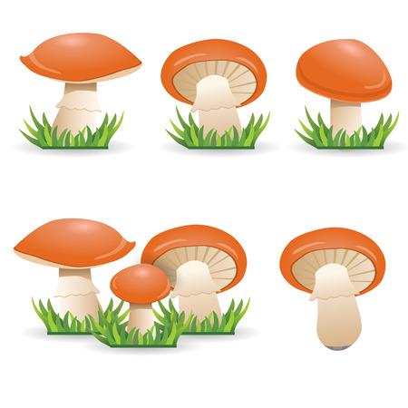 mushrooms slippery jacks. vegetable healthy food. 向量圖像