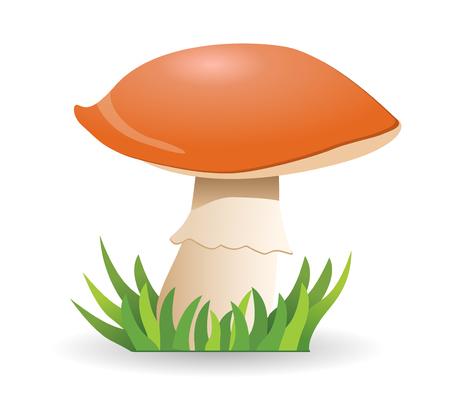 Mushroom boletus. vegetable healthy food. mushrooms isolated on white background.