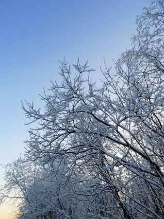 Tree on blue sky background in winter. Banco de Imagens
