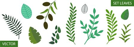 Set of different tree leaves. Isolated on a white background