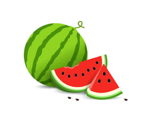 Watermelon and juicy slices. vector illustration in flat style. concept Summer food.