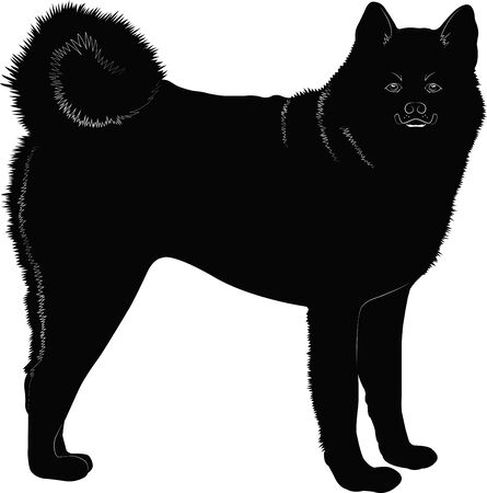 Dog Akita-inu. Black silhouette on a white background. Vector graphics.