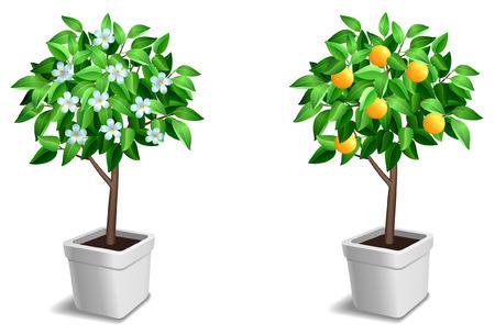 Vector set di due piccoli alberi. Vettoriali
