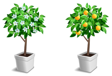 Vector set of two little tree. Illustration