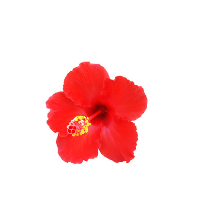 Hibiscus flower on a white background Imagens - 78155883