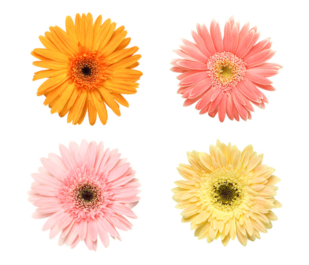 Beautiful collection of Daisy flowers isolated on white background Stock Photo - 84576073