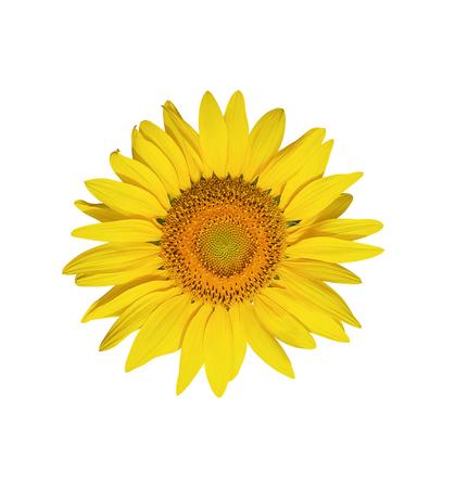 Sunflower flower isolated on white background Stock Photo