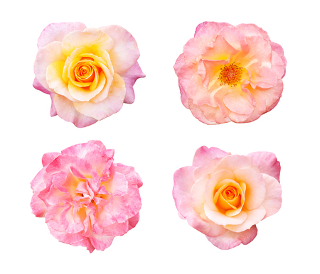 Beautiful collection of roses flowers isolated on white background Stock Photo - 84974603