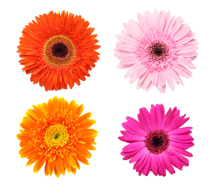 Beautiful collection of Daisy flowers isolated on white background Stock Photo