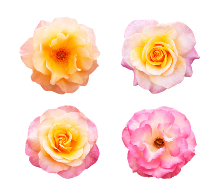 Beautiful collection of roses flowers isolated on white background Stock Photo