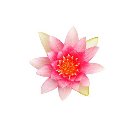 Beautiful lotus flower isolated on white background Stock Photo - 85288852