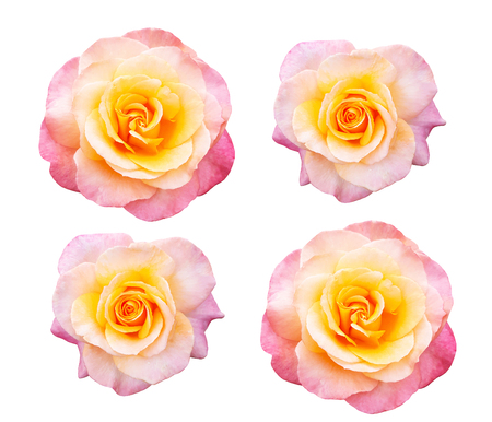 A beautiful collection of roses flowers isolated on white background