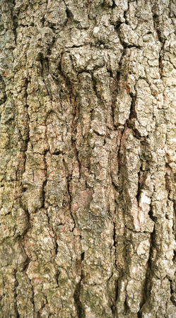 Tree bark background and texture Stock Photo - 85628653