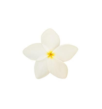 Tropical frangipani flower isolated on white background Stock Photo - 85528374