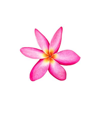 Tropical frangipani flower isolated on white background Stock Photo - 85437983