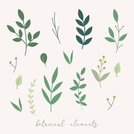 Vector botanical decoration elements. Floral leaves set. Botnical vector leaves and flowers Standard-Bild - 133546251