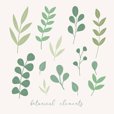 Vector botanical decoration elements. Floral leaves set. Botnical vector leaves and flowers. vector floral elements for design Standard-Bild - 133546259